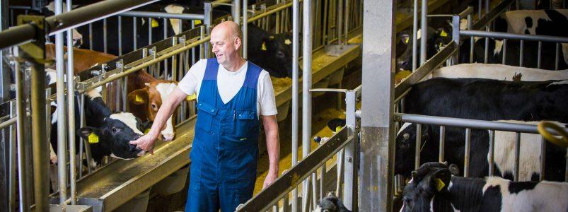 Familie Jansen, kalverbedrijf