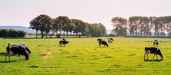 Duurzame melkveebedrijven presteren beter