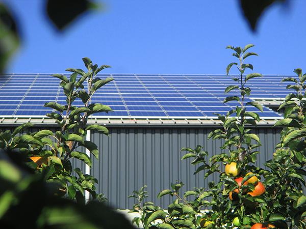 zonnepanelen op het dak van fruitteler Florissen uit Dronten